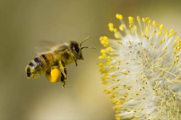 Η πολύτιμη συμβουλή με το κουτάλι για να βοηθήσετε να σωθούν οι μέλισσες!