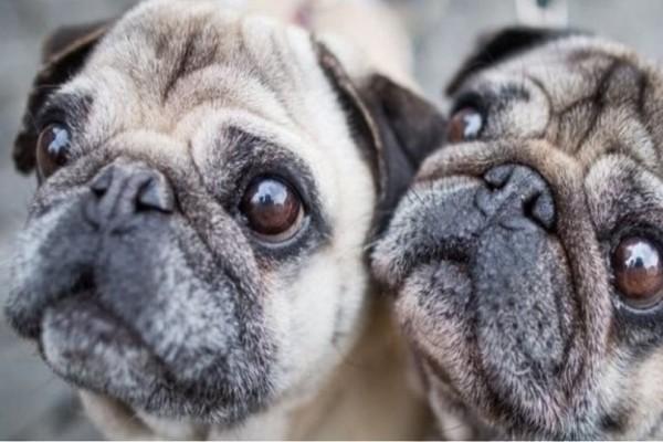 Η εφορία κατάσχεσε σκυλάκι από οικογένεια με χρέη και το πούλησε στο e-Bay!