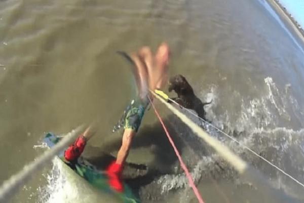 Πίτμπουλ επιτέθηκε σε άντρα ενώ έκανε kite surf!