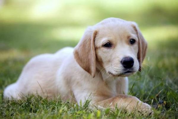 Κι όμως: Υπάρχει ράτσα σκύλου που... δεν γαβγίζει!