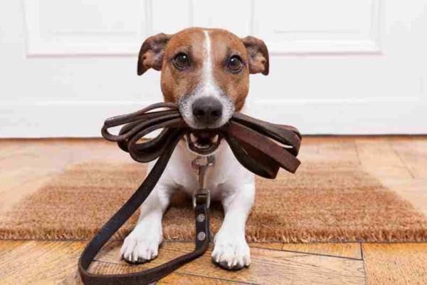 Αλήθειες και μύθοι για την βόλτα του σκύλου σας