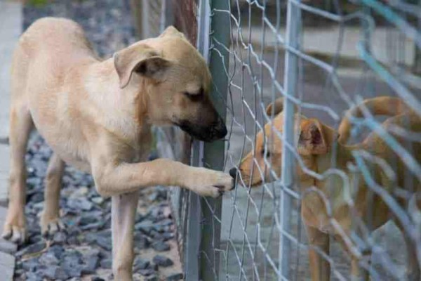 Kαλαμάτα: Για κακοποίηση ζώων καταδικάστηκαν δύο άτομα!