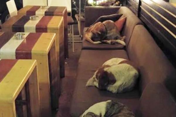 Μυτιλήνη: Καφετέρια επιτρέπει στα αδέσποτα σκυλιά να κοιμούνται μέσα κάθε νύχτα!