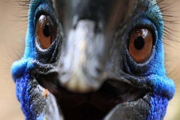 ΗΠΑ: Πωλείται το πιο επικίνδυνο πουλί στον κόσμο που σκότωσε τον ιδιοκτήτη του!