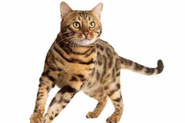 Τραγικό: Έριξε οξύ σε μια γάτα!