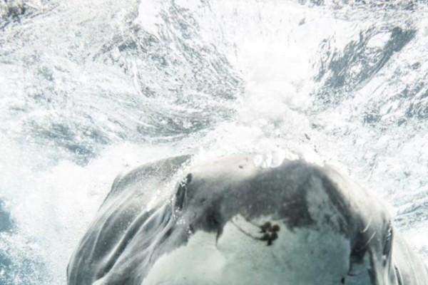 Απίστευτες εικόνες απο Αυστραλό δύτη- Μια ανάσα απο τα σαγόνια του καρχαρία!