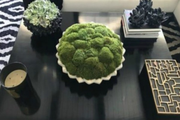 To φυτό που δεν μαραίνεται ποτέ είναι οτι καλύτερο για το σπίτι!