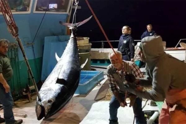 Νάξος: Ψάρεψαν τόνο - γίγαντα 2,74 μέτρων και 288 κιλών!