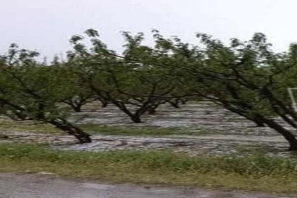 Ημαθία: Καταστράφηκαν αγροτικές καλλιέργειες από το χαλάζι!