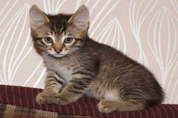 Σοκ στην Κρήτη: Αδίστακτοι άγνωστοι σούβλισαν γατάκι την Μ. Παρασκευή!