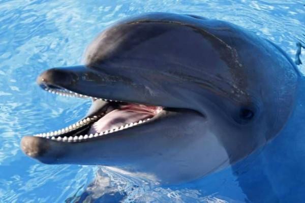 Κι όμως τα δελφίνια βγάζουν μόνα τους ονόματα!
