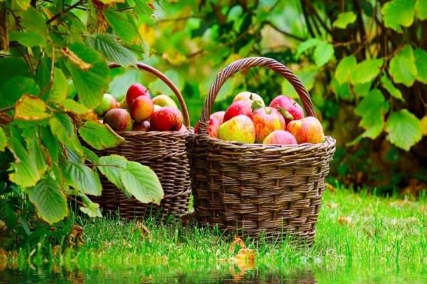 Bιολογικές καλλιέργειες: Επιπλέον κονδύλια!