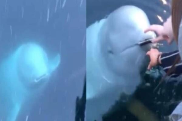 Απίστευτο: Φάλαινα επιστρέφει κινητό που έπεσε στη θάλασσα! (Video)