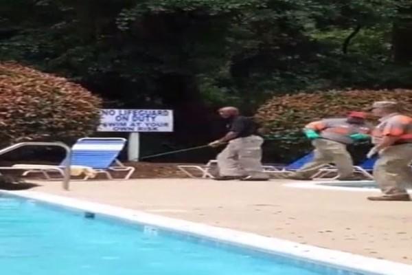 Τρομακτικό: Tεράστιος κροκόδειλος βρέθηκε σε πισίνα ξενοδοχείου!