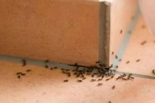 Μυρμήγκια στο σπίτι: Ποια τα 6 φυσικά κόλπα για να απαλλαγείτε οριστικά!