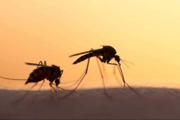 Μαγνησία: Κίνδυνος από κουνούπια!