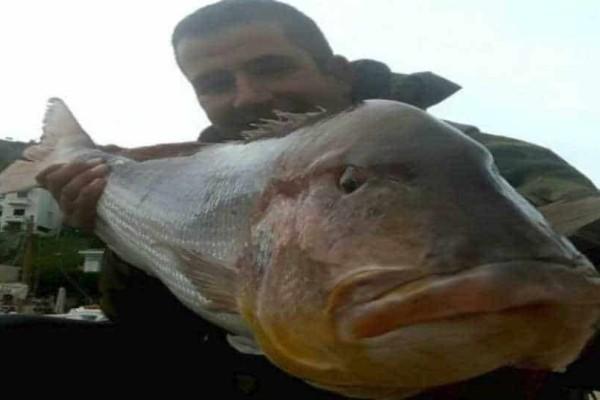 Χίος: Ψαράς έπιασε συναγρίδα 15,5 κιλών