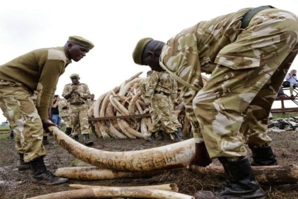 Θα επιτραπεί ξανά το εμπόριο ελεφαντόδοντου;