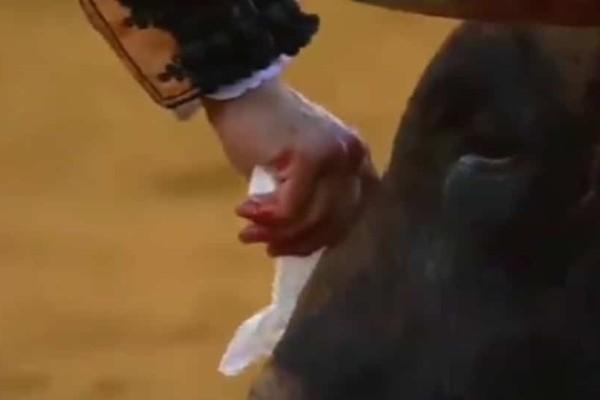 Κατακραυγή:  Ταυρομάχος σκουπίζει τα δάκρυα του ζώου λίγο πριν το σκοτώσει!