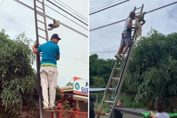Απεγκλώβησαν βραδύποδα από ηλεκτροφόρα καλώδια! (Video)