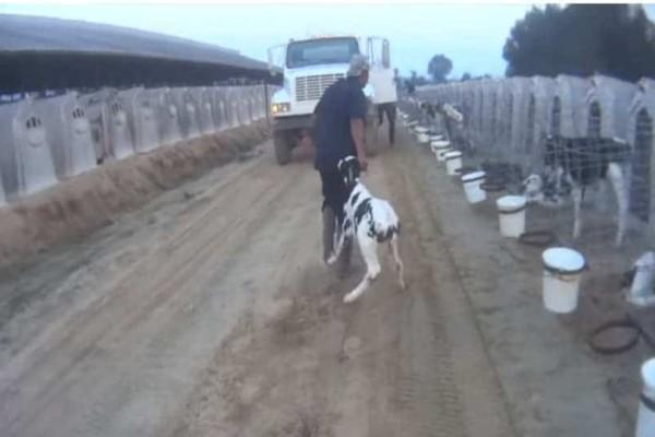 Φρίκη με την κακοποίηση των ζώων στη «Ντίσνεϊλαντ του αγροτουρισμού»! (Video)