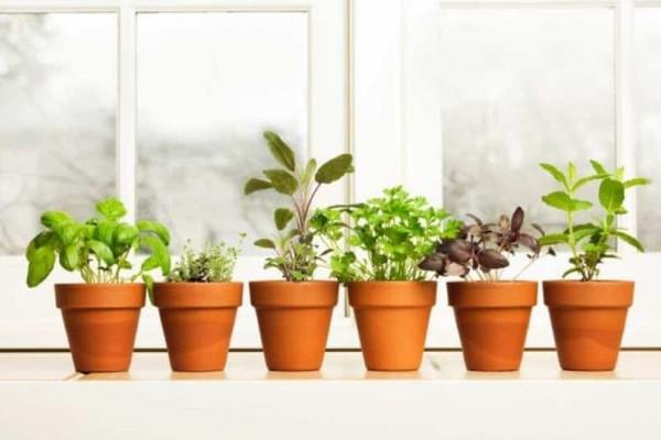 9+1 αρωματικά φυτά για το σπίτι σας που πρέπει οπωσδήποτε να έχετε!