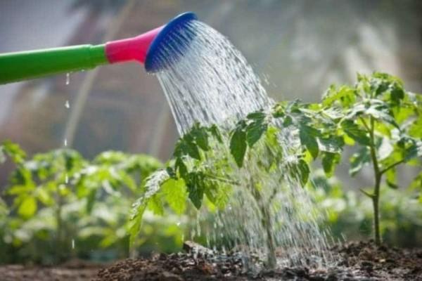 8+1 λάθη που κάνουμε στο πότισμα των φυτών μας!