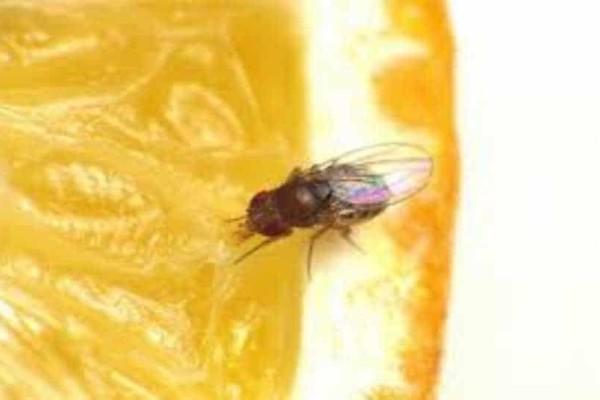 Φοβερά κόλπα για να απαλλαγείς από τις μύγες!