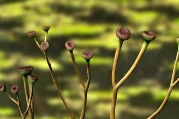 Τρομακτικό: 600 είδη φυτών έχουν εξαφανιστεί τα τελευταία 250 χρόνια!