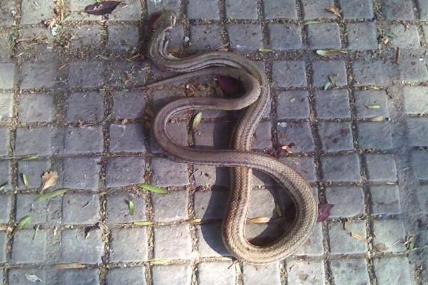 Πανικός: Φίδι σε κεντρικό δρόμο του Βόλου!
