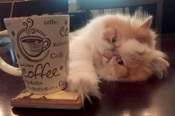 Η γάτα με το μόνιμα θυμωμένο πρόσωπο!