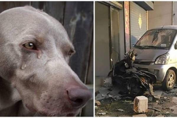 Ιδιοκτήτης σκύλου σκότωσε με το αμάξι του τον άντρα που δηλητηρίασε τον σκύλο του