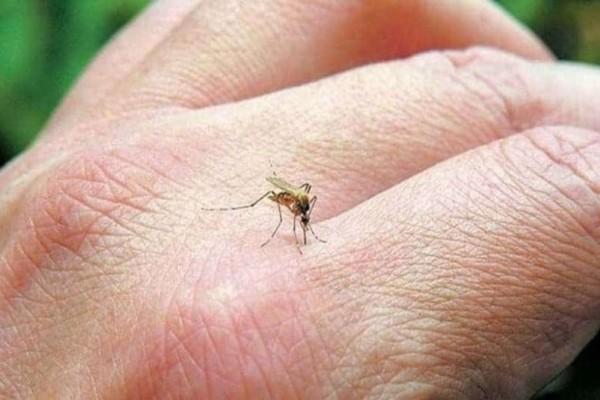 Αυτό είναι το μυστικό για να μην σας τσιμπούν τα κουνούπια!