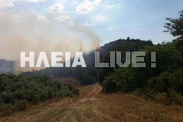 Συναγερμός στην Ηλεία: Μεγάλη πυρκαγιά σε αγροτοδασική έκταση!