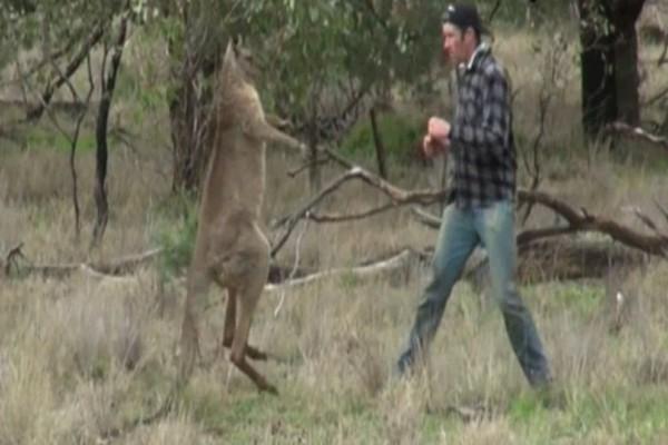Άνδρας γρονθοκοπεί καγκουρό για να σώσει τον σκύλο του! (Video)