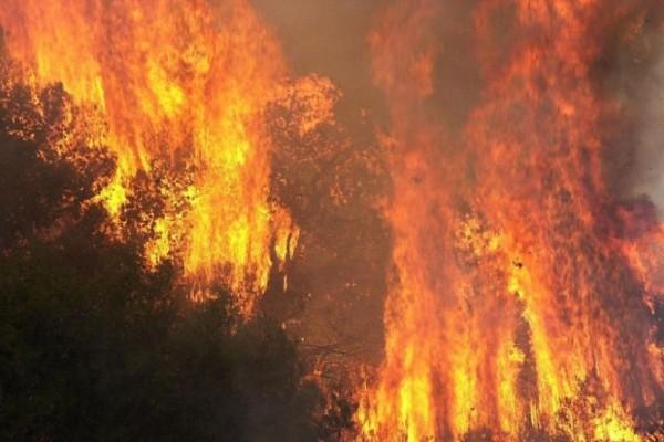Ισχυρή πυρκαγιά στην Βοιωτία!