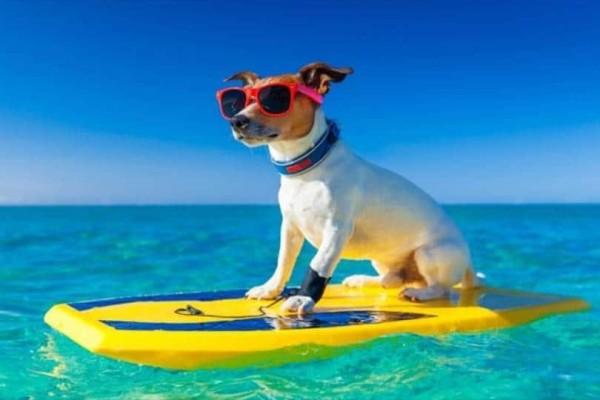 Αν έχεις σκύλο και θες να πας στην θάλασσα, σε αυτές τις παραλίες μπορείς!