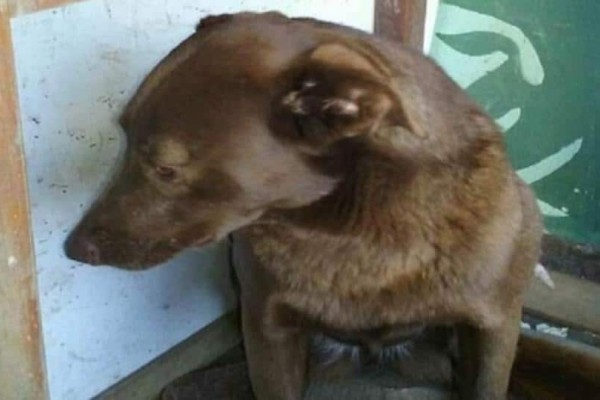 Σκυλίτσα με κατάθλιψη κάθεται μόνη σε καταφύγιο για 2 χρόνια. Ξαφνικά μυρίζει κάτι γνωστό! (Video)
