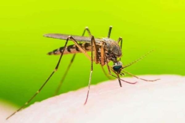 Γλιτώστε από τα ενοχλητικά κουνούπια με αυτόν τον τρόπο! (Video)