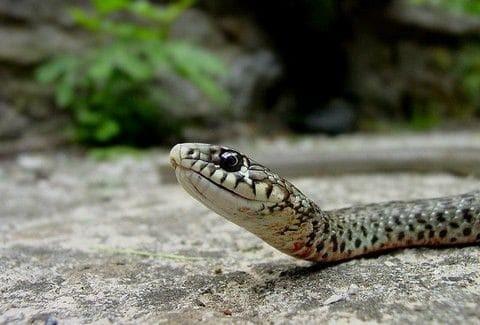 Ανατριχιαστικό: Γυναίκα ισχυρίζεται ότι γέννησε...φίδι!
