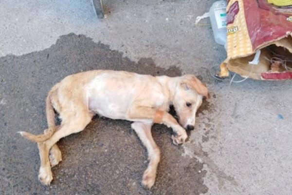 Εξοργιστικό περιστατικό στην Κρήτη: Πέταξαν κουτάβι με ορό στα σκουπίδια!