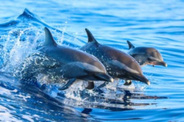 Μοναδικό θέαμα στη Φθιώτιδα! Δελφίνια