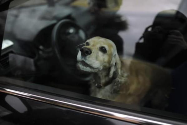 Φρίκη στη Μαγνησία: Σκύλος πέθανε από τη ζέστη μέσα σε Ι.Χ.!
