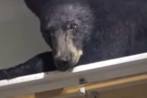 Πως θα σου φαινόταν να άνοιγες την ντουλάπα σου και να έβρισκες μέσα μια αρκούδα;(Video)