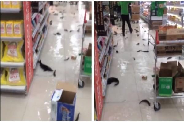 Αδιανόητο: Αυτό που αντίκρισαν οι πελάτες μέσα στο Σούπερ Μάρκετ δεν ξανάγινε στον κόσμο. Δεν πίστευαν στα μάτια τους! (Video)