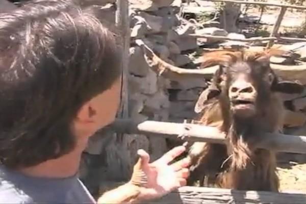 Άνδρας τσακώνεται με τράγο κι εκείνος τον φτύνει! (Video)