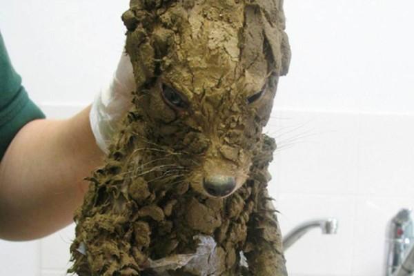 Βρήκαν ένα μυστηριώδες πλάσμα βουτηγμένο στη λάσπη. Όταν το καθάρισαν και είδαν τι ήταν, δεν μπορούσαν να το πιστέψουν…