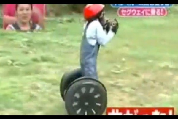 Απίστευτο: Χιμπατζής οδηγάει...segway! (Video)