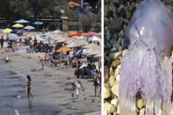 Μεγάλη προσοχή! Αυτές οι παραλίες έχουν πρόβλημα με τις μέδουσες!