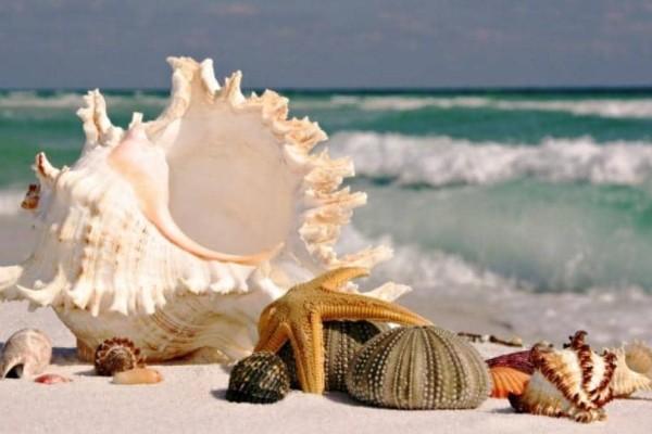 Γιατί ακούμε τον ήχο της θάλασσας σε ένα κοχύλι;